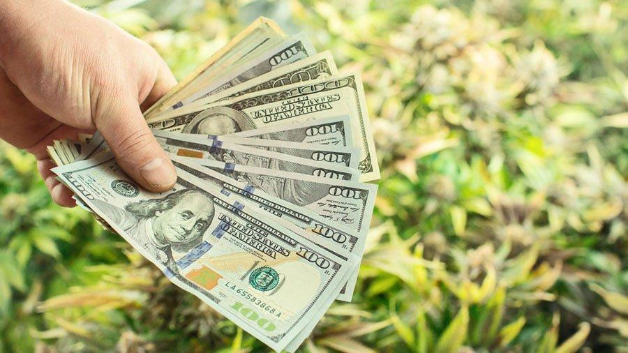 Fundo de investimento visa US 250 mi em mercado da maconha nos EUA Startups canábicas recebem investimento recorde em 2019