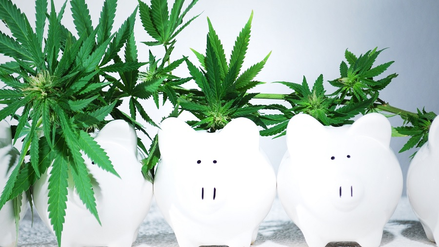 cofrinho plantas Esqueça a bitcoin, a maconha é o melhor investimento, diz gestora de fortunas